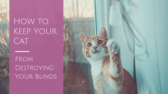 cat clawing blinds