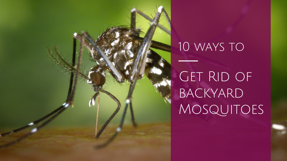 get rid of backyard mosquitoes